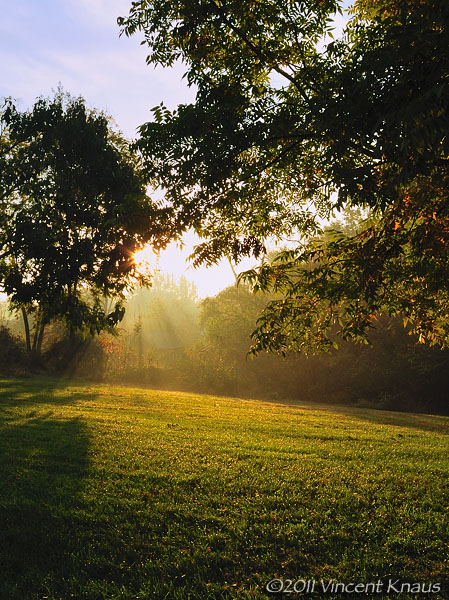 Morning in the Yard