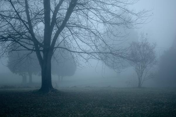 Fog © Vincent Knaus