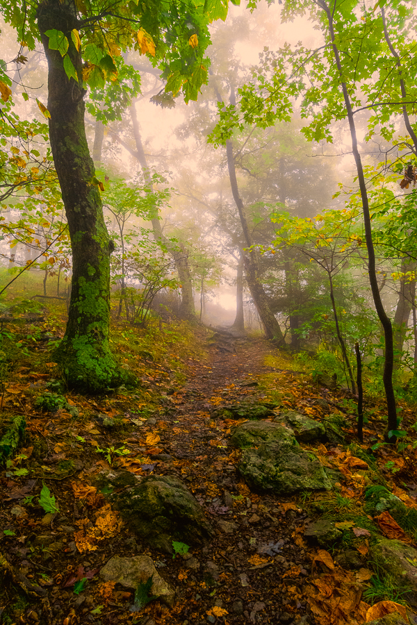 Trail in Shenandoah National Park