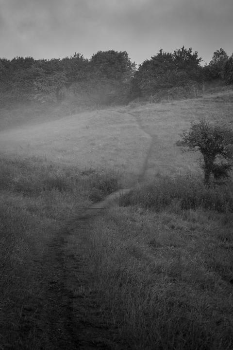Foggy Morning Footpath
